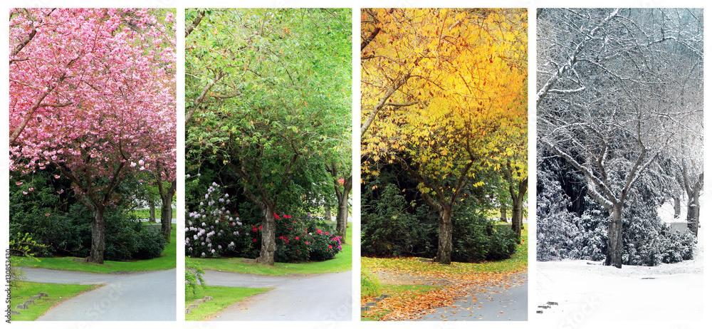 Fototapety, obrazy: Four seasons on the same street.