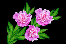 Colorful Bright Flowers Peonie...