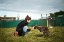 Woman Feeding Wallaby In Waima...