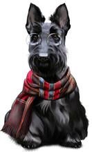 Scottish Terrier Watercolor Pa...