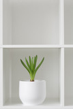 Hyacinth plant in a white pot. Flower on a rack. Interior background.