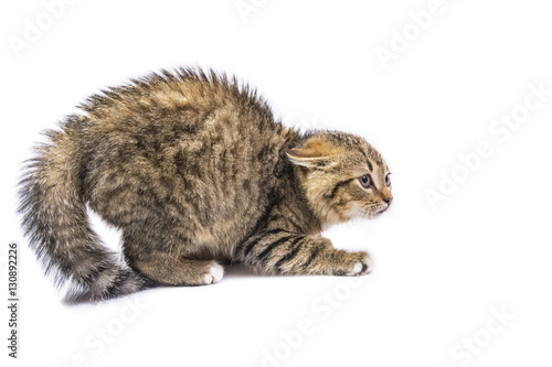 Photo sur Toile Chat isolated frightened cat