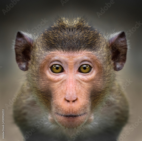 Spoed Foto op Canvas Aap Monkey face close up