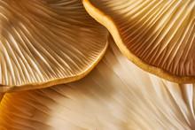 Maitake Mushrooms Cluster