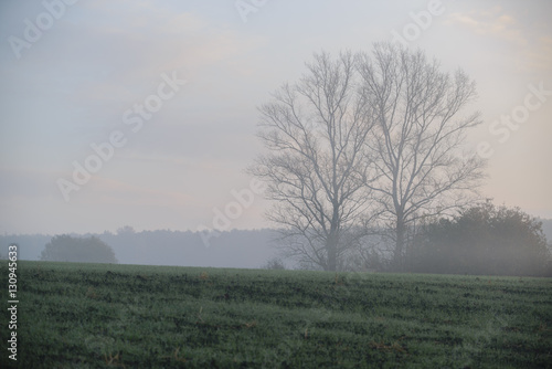 Tuinposter Olijf thick morning fog hides the forest