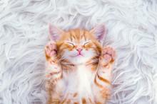 Cute Little Red Kitten Sleeps On Fur