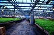 agribusiness greenhouse seedling spring