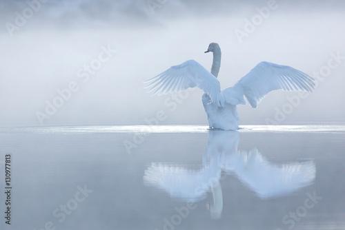 Foto op Plexiglas Zwaan Cygne sur l'eau