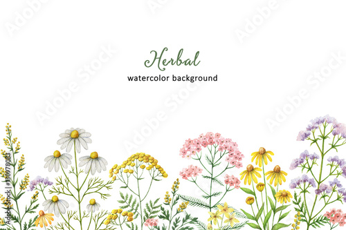 Photo  Watercolor banner with medical plants.