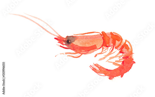 Single orange shrimp painted in watercolor on clean white background Canvas Print