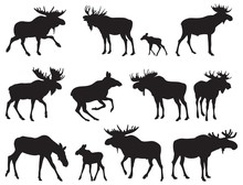 Set Of Moose Silhouettes. Vect...