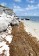 Seaweed Caribbean Beach