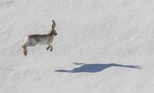 Hare Raising Experience - A Sn...