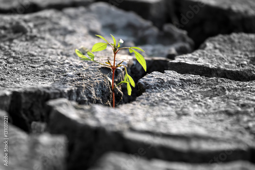Foto  sprout plants growing on very dry cracked earth
