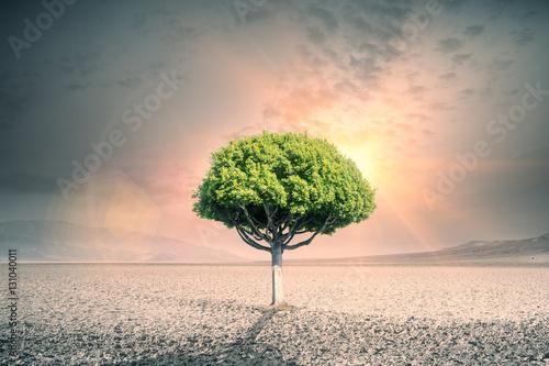 Fototapety, obrazy: Tree in desert
