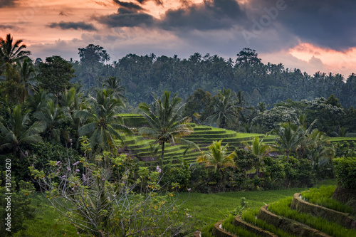 Poster Rijstvelden Bali Rice Fields. The village of Belimbing, Bali, boasts some of the most beautiful and dramatic rice terraces in all of Indonesia. Morning light is a wonderful time to photograph the landscape.