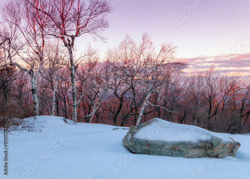 Tuinposter Lavendel Birch trees in the snow at dusk at High Point State Park, New Jersey