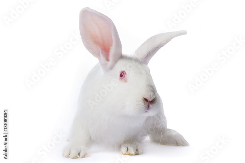 Fotografie, Obraz  Timid young white rabbit isolated on white background.