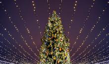 Christmas Tree Lights.