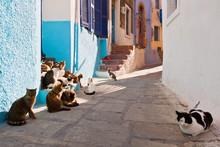Cats In A Street Of Mandraki V...