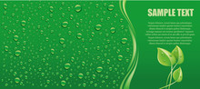 Water Drops On Green Background With Place Forr Text