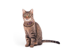 Brown Tabby Cat Sitting And Lo...