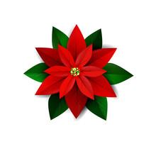 Poinsettia Flower, Symbol Of C...