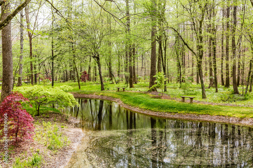 Fototapeten Wald Lake in Spring Forest