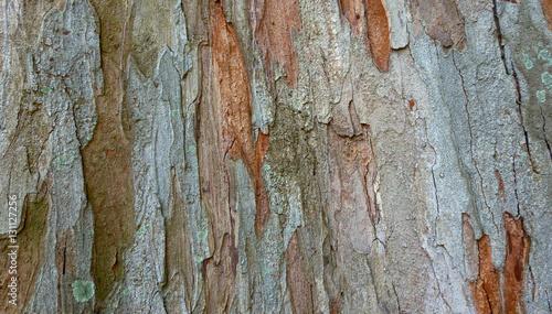 Canvas Prints Textures Tree trunk texture