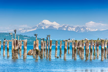 Old Pilings At Anacortes Ferry Terminal Give Nesting Boxes A Great View Of Mount Baker