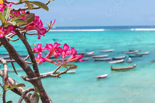 Poster Turquoise Beautiful tropical ocean landscape, asian flowers, fishing boats on the background. Nusa Lembongan, Indonesia.