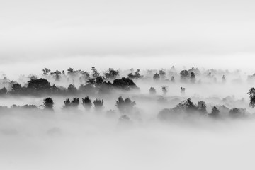 Obraz na SzkleFog over the forest, Black and white tones in minimalist photography