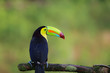 canvas print picture Regenbogentukan in Costa Rica