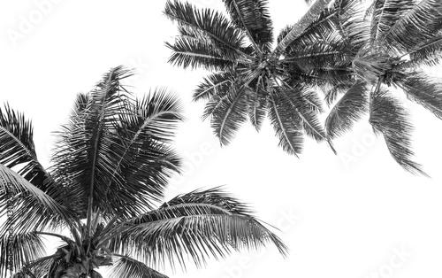 Stickers pour porte Palmier cimes noires de cocotiers, fond blanc