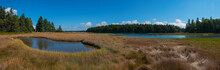 Acadia National Park Wetlands Panorama
