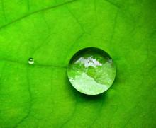 Drop Water On Lotus Leaf