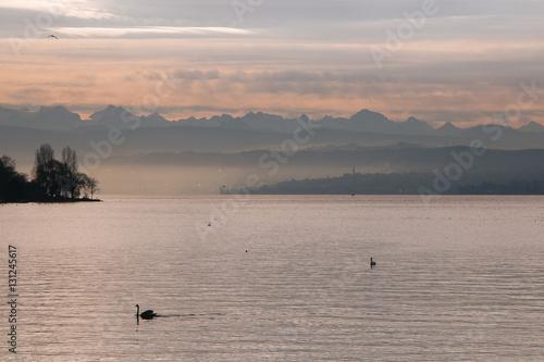 Romantico tramonto al lago di Zurigo con cigno