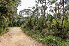 Road In Horton Plains National...