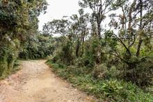 Road In Horton Plains National Park, Sri Lanka.