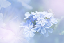 Background Of Colorful Flower In Blur Concept