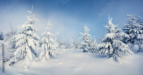Sunny morning scene in the mountain forest.