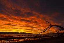 Vivid Sunrise At Pyramid Lake, Nevada With Dead Tree Limb.