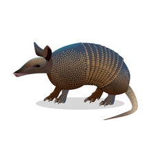 Armadillo Isolated. Realistic ...