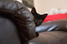 A Beautiful Black Kitten Hiding On Couch