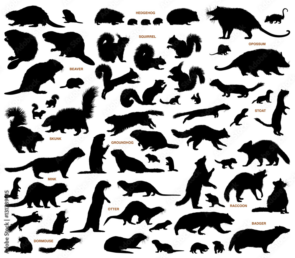 Fototapeta Small mammals of the northern lands vector silhouettes collection