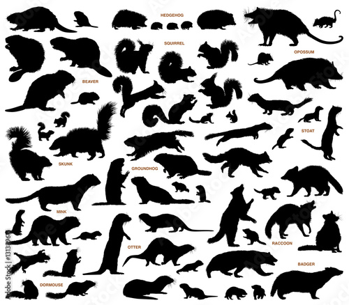 Small mammals of the northern lands vector silhouettes collection Wall mural