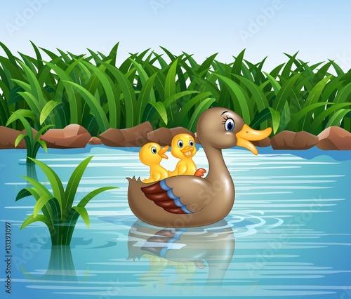 Aluminium Prints River, lake Duck family swimming