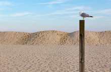 Seagull On A Post At The Beach