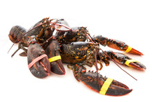 Living Lobster Isolated On Whi...