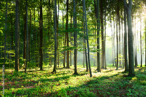 Foto op Canvas Bossen Morning in the forest